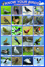 laminated common BIRDS educational kids teaching school poster | wildlife garden