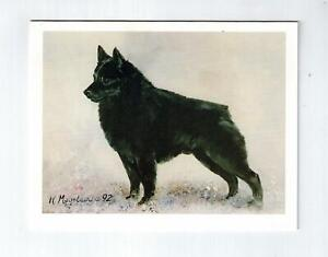 New Schipperke Profile Notecard Set 12 Notecards Envelopes Ruth Maystead SCP-6