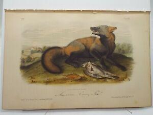 "Audubon Quadrupeds Print Volume 1 1854  ""American Cross Fox"" Plate VII"