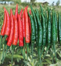 270 Seeds Bird Chilli Top Thailand Vegetables Food Health