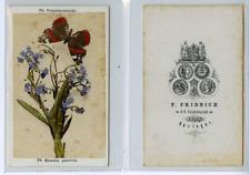 F. Fridrich, Nature Morte, Myosotis palustris CDV vintage albumen carte de visit
