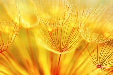STUNNING ABSTRACT DANDELION FLOWER CANVAS #782 QUALITY FLORAL PICTURE WALL ART