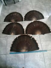 5 Wild Turkey Feather Fan'S