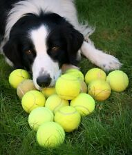 50 used tennis balls ( dogs toy , medical walker support , and many more )