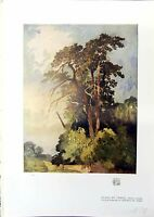 Original Old Antique Print Study Trees Alfred Rich 1914 Colour 20th Century