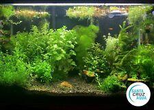 New listing 12 Species Easy Beginner Plant Package - Aquatic Aquarium Plants Hornwort+