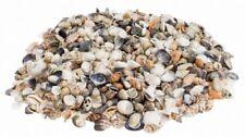 NaDeco  Muschelmix small 0,5kg | Bastelmuscheln | kleine Dekomuscheln | kleiner