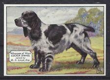 1938 Uk Dog Art Photo Hand Colored Ardath Cigarette Card English Cocker Spaniel