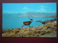 POSTCARD ANIMALS DEER - A HIGHLAND MONARCH