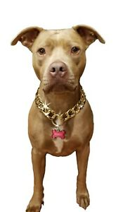 Plastic, light weight, gold chain dog collar