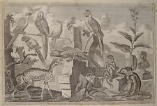 Francis Barlow Menagerie Papagei Ara Kakadu Gibbon Affe monkey Zoo Tierpark 1700