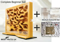 Harvester Ants Nest with sand bed Ant Farm Formicarium Queen Messor Barbarus Top