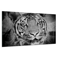 Tempered Glass Photo Print Wall Art Picture B/&W Tiger Panther Cat Prizma GWA0344