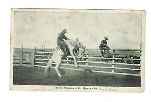 Postcard Fort Morgan, CO 1911 Cowboy Busting Bronchos at Fort Morgan, Colo