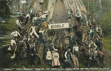 "Fresno CA * ""Boole"" Largest Tree in World  1914 * Mt Rob Roy  Sequoia"