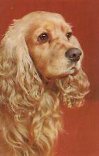 Vintage Dog Postcard American Cocker Spaniel Unposted