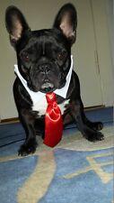 Hundekrawatte mit Kragen und Halsband  * WHITE * Hochzeit,Party.. dogszone.de