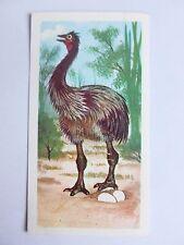 Brooke Bond Prehistoric Animals tea card 32. Aepyornis. Elephant birds.