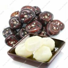 Semi di castagna d'acqua dolce per esterni BONSAI perenne Semi Di Frutta 100 PZ
