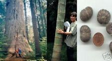 Mächtige Bäume für Ihren Garten 3 schnellw. Giganten / Riesenbaum-Samensortiment