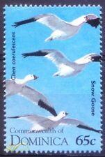 D2e- Dominica 1995 MNH, Snow Goose, Water Birds