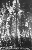 Founders Tree Humboldt Redwood State park Ca Moulin Real Photo RPPC