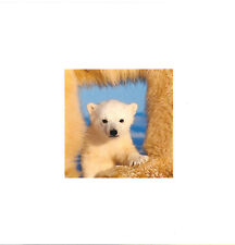 Gay Lesbian LGBT Christmas Holiday Cards Art Wolfe Polar Bear Cub