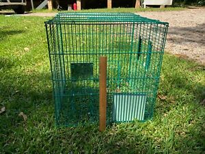 Indian Myna Bird Magic humane trap by CCD&VC Australia. Over 1000 sold.