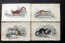 William Jardine C1840 Lot of 6 Hand Col Animal Prints. Book Plates