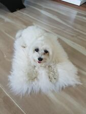 100% GENUINE Sheepskin PET BED Rug Seat Cover Pet Puppy Dog Cat Mat Color White