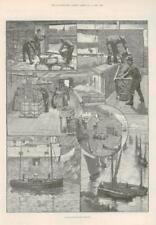 1891 - Antique Print CORNWALL Pilchard Factory Press Bed Salting Tanks  (190)