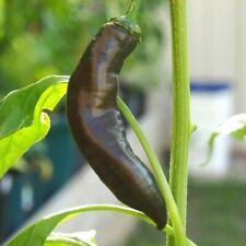 Aji panca, Peruvian red pepper, Aji panca negro 25 seeds