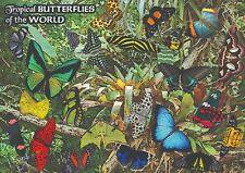 PLAKAT RELAKSUJĄCY Motyle tropikalne - NOWY  plakat A2 (42 x 59.4 cm)