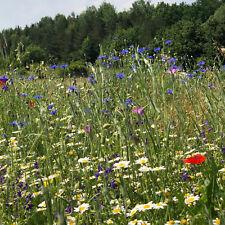 Bienenweide Wildblumenwiese Blühende Landschaft mehrjährige Mischung ohne Gräser