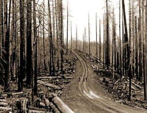 "1937 Coates Logging Road, Tillamook, OR Vintage Old Photo 8.5"" x 11"" Reprint"