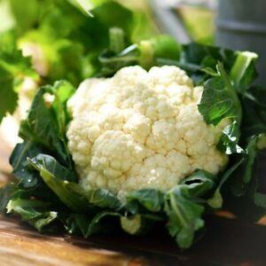 40 ORGANIC Cauliflower SNOWBALL Seeds – Easy To Grow – Hardy Crop – Free Postage