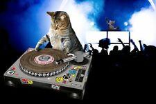 SUCK UK Cat Scratching DJ Deck Cat Scratching Toy L@@K!