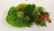 Small Bag of Lichen Moss Assorted Colours 20g, Dolls House Miniature, Garden