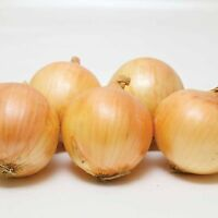 ONION SETS - VULCAN F1 - 1/4 KG (APPROX 60-70 SETS)