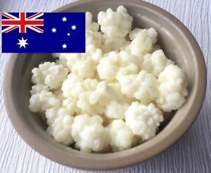 Organic Milk Kefir Grains High Quality & Active  Priority Post (or Express)