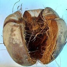 Coconut Shell Orchid Husk Tropical Plant 100%Natural Decoration Garden Sri Lanka
