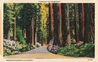 Postcard Redwood Highway California