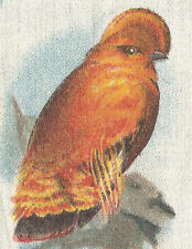 Vintage Bdv tobacco cigarette silk - Bird - Cock-Of-The-Rock