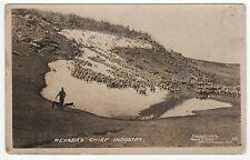 NEVADA CHIEF INDUSTRY RPPC Real Photo Postcard ANIMALS Winnemucca NV Moore Stone