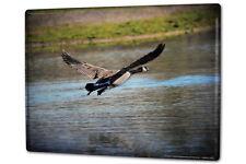 Tin Sign XXL Bird Species  Canada goose