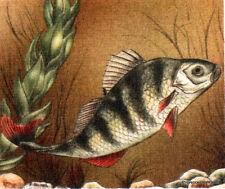 Yt 2664 FISH THE BOOM FRANCE FDC Envelope Letter Premier day