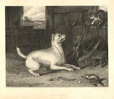 Sir Edwin Landseer, Dog, Cat, Rat, Art Journal, Vintage, 1888 Antique Art Print,
