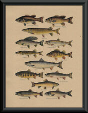 North American Game Fish & Fishing Flies Poster Reprints On 1920s Paper *P072