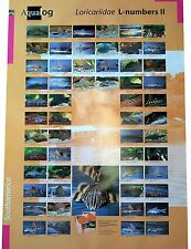 AQUALOG: Poster All L-Numbers (Loricariidae/Plecos) # 2, LAMINATED