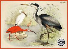 24 Bände antiquarische Vogelbücher Top Bilder Vogelkunde Vögel Ornithologie DVD